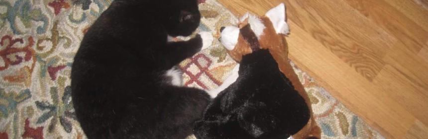 Joseph, the cat, in healthier times.
