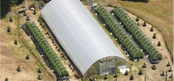 Photo of greenhouse