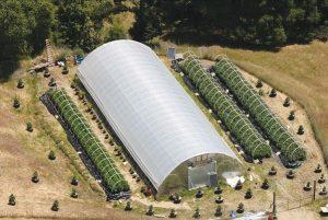 Greenhouse and marijuana