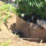 Dog under a pot plant