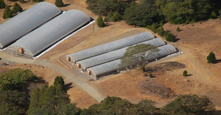 Greenhouses in Humboldt County in 2014.