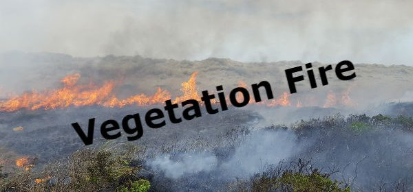 vegetation fire icon
