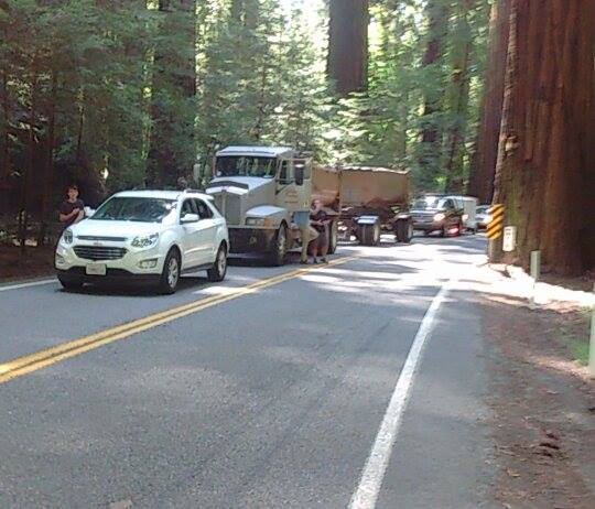 Traffic stuck in a redwood grove