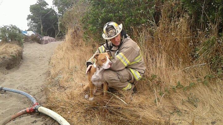 Fireman with dog.