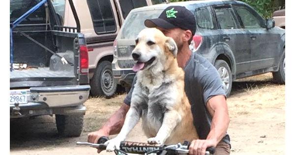 Doggone Motorcyclist