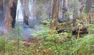 Picket Fire fire burning understory