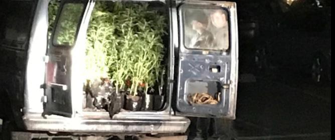 back of marijuana van