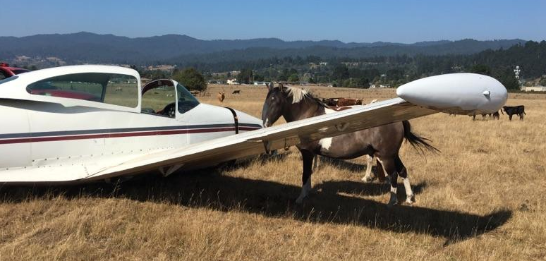 plane crash with horse