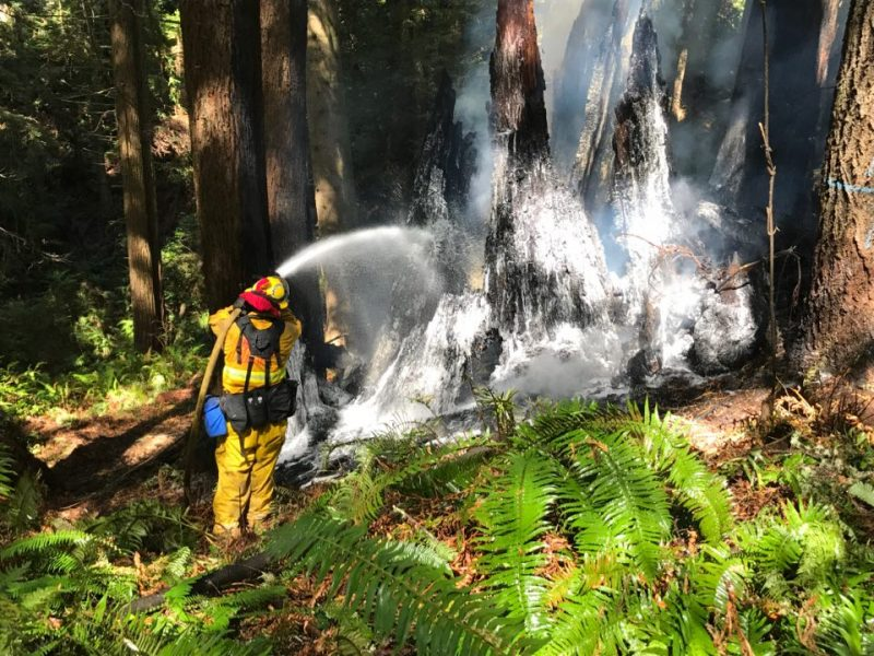 Firefighter douses the Redwood stump