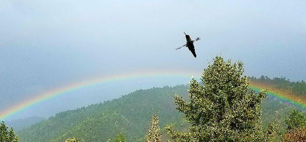 Rainbow and Hummingbird