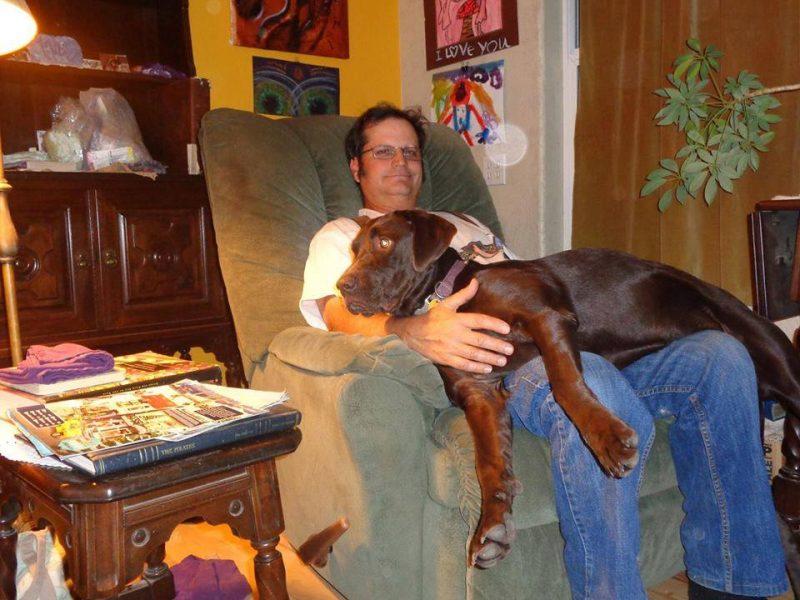 Big dog in man's lap