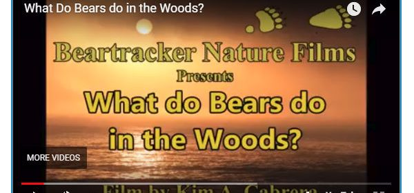 What do bears do in the Woods