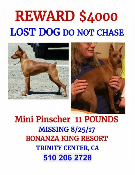 missing mini Pinscher post dog