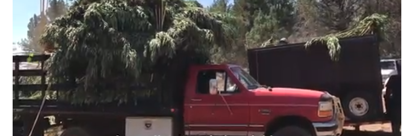Screenshot from an L.A.Times Video about the Hmong in Siskiyou