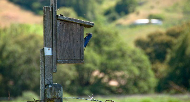 Bird bug birdhouse