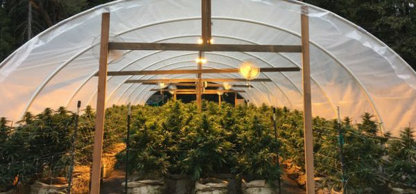 Greenhouse [Image provided by the Golden Tarp Awards]