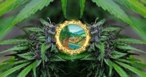Marijuana Fortuna