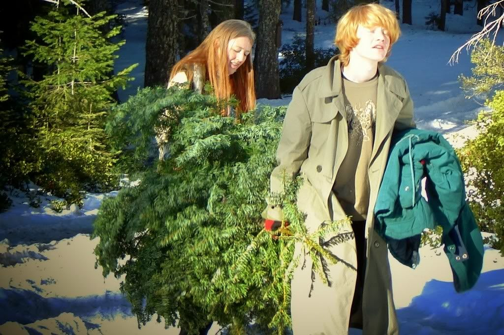 Christmas Tree hunting with
