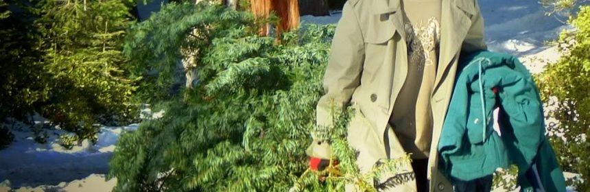 Christmas Tree hunting with