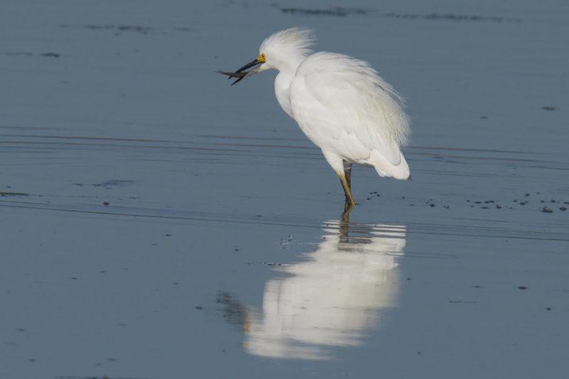 Egret [Photo by Lynn Harrington]