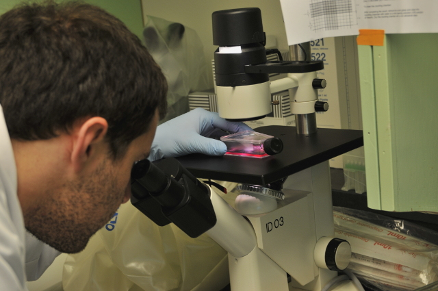 Biochemistry senior Michael Martinez looks at cells in the CRISPR lab.