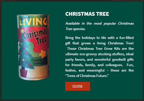 Grow your own Christmas tree jonsteen company