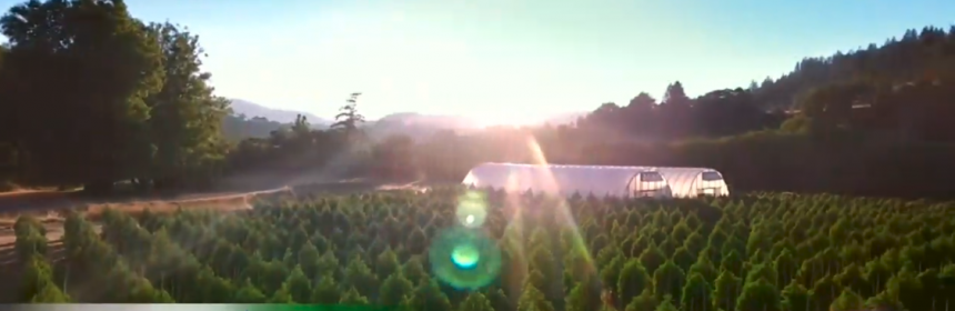 Greenhouse still from the Profit in Marijuana Country