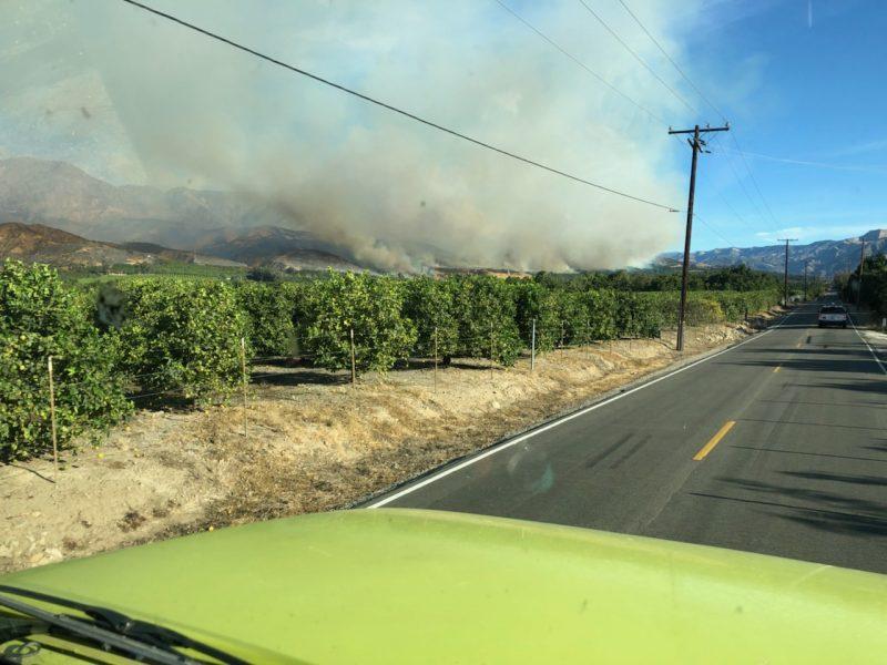 Thomas fire above avocado groves