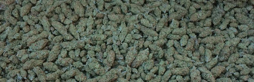 buds marijuana HCSO