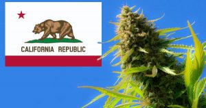 cal cannabis california