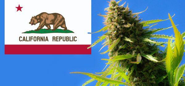 cal cannabis california