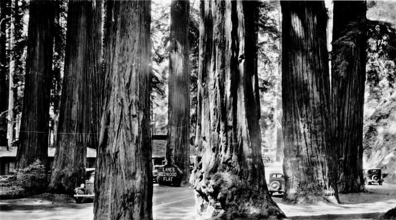 """Lane's Redwood Flat, ON the Redwood Highway"""