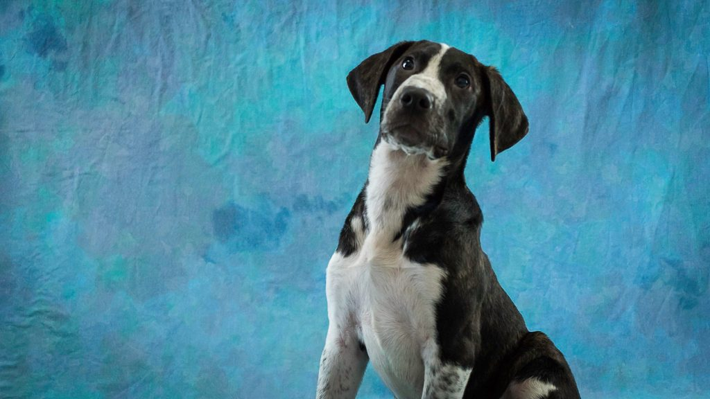 Update Adopted This Plott Hound Mix Is Looking For A Forever Home Redheaded Blackbelt