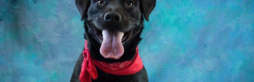 black dog with red bandana