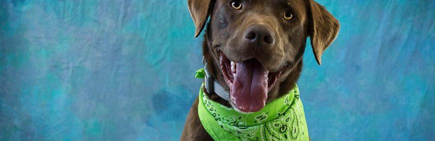 Brown dog green bandana