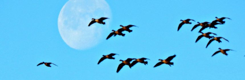 birds, blue and moon