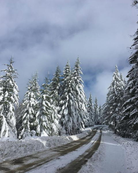 """Redwood National Park Service, """"the Tall Trees Access Road is closed. As of now we don't know when the road will re-open, hopefully sometime this week."""""""