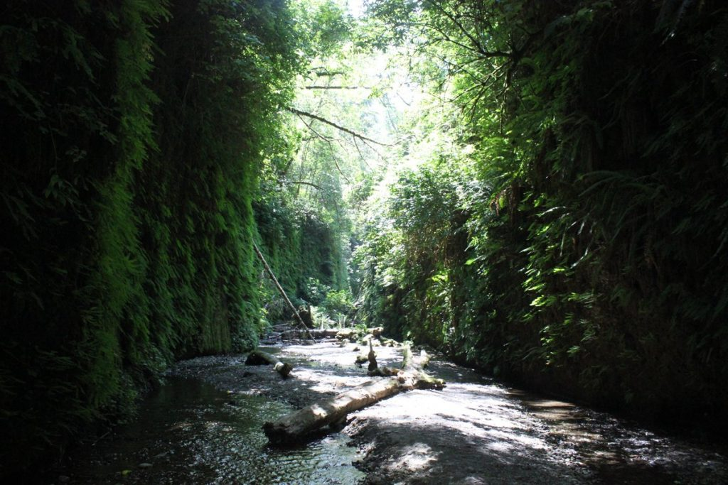 Fern Canyon [Photo by Redwood National and State Parks]