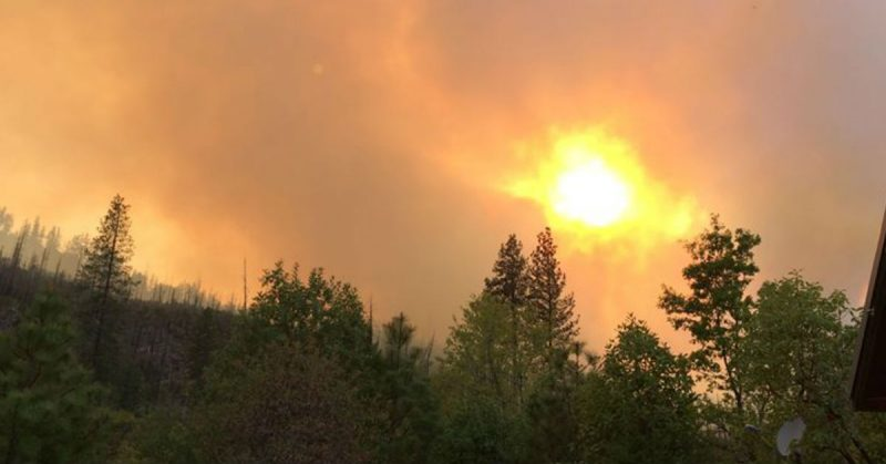 he sun is nearly covered by smoke as spires of burned trees from the Sims and Saddle Fires rise from the area northwest of Hyampom.