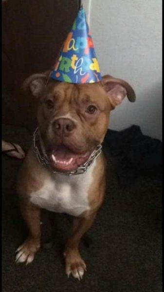 Mugsy with birthday hat