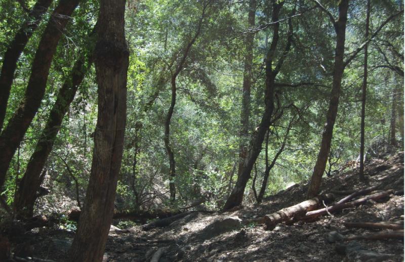 Restored wilderness
