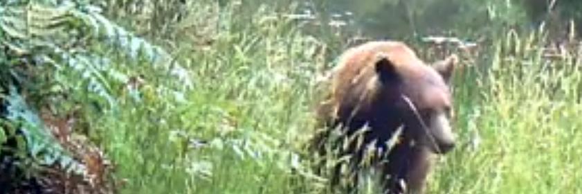 cinnamon honey mama bear