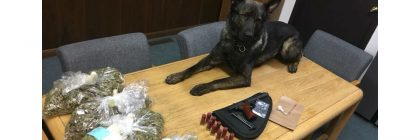 POlice dog with drugs