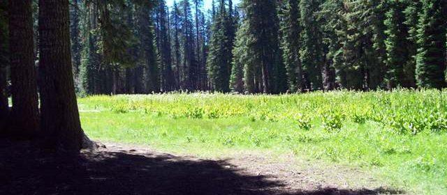 Haypress meadow