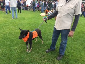dog in orange vest