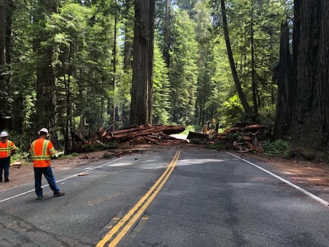Redwood fallen across hwy 199