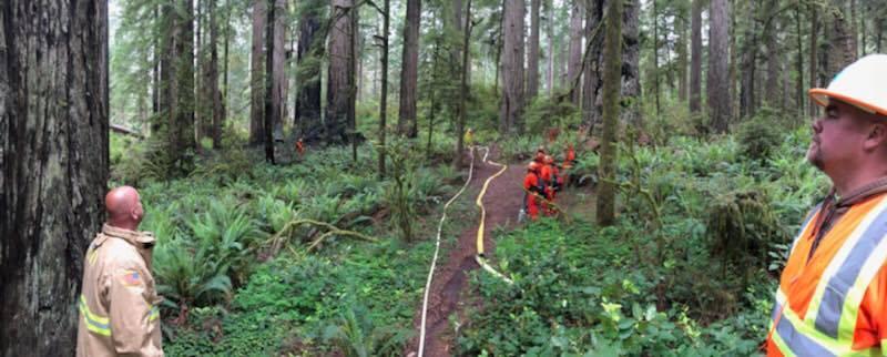 Crews fighting fire in redwoods
