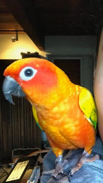 Amy and Brian's parrot
