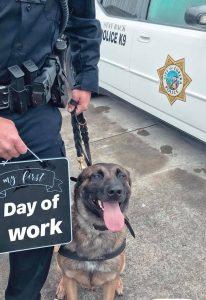 Police dog K-9 K9