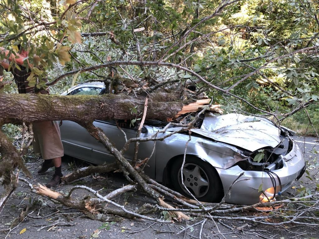 A tree fell on a car.